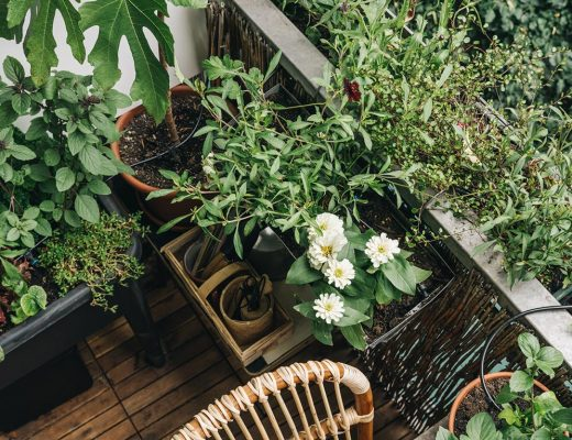 Balkon im Urlaub automatisch gießen