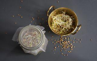Sprossglas für Microgreens und Keimsprossen selber machen.