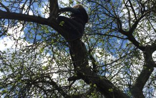 Apfelbaum Schrebergarten