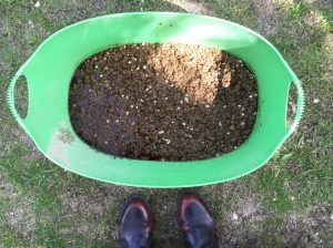 Morcheln Pilze Substrat