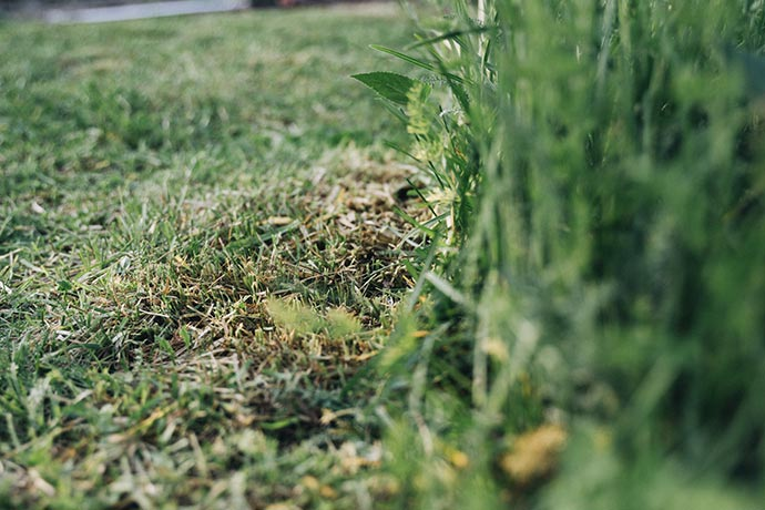 Rasenkante mit Rasenmäher anlegen