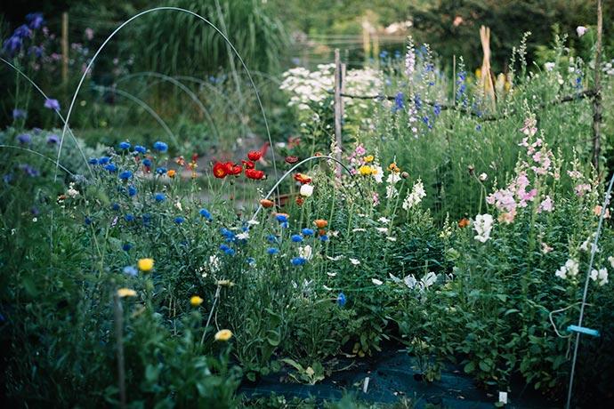 Blumenbeet im Frühling