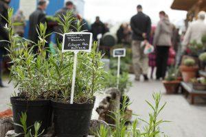 Kräutertage Späthsche Baumschule Veranstaltung für Gartenfreunde Tipp Berlin