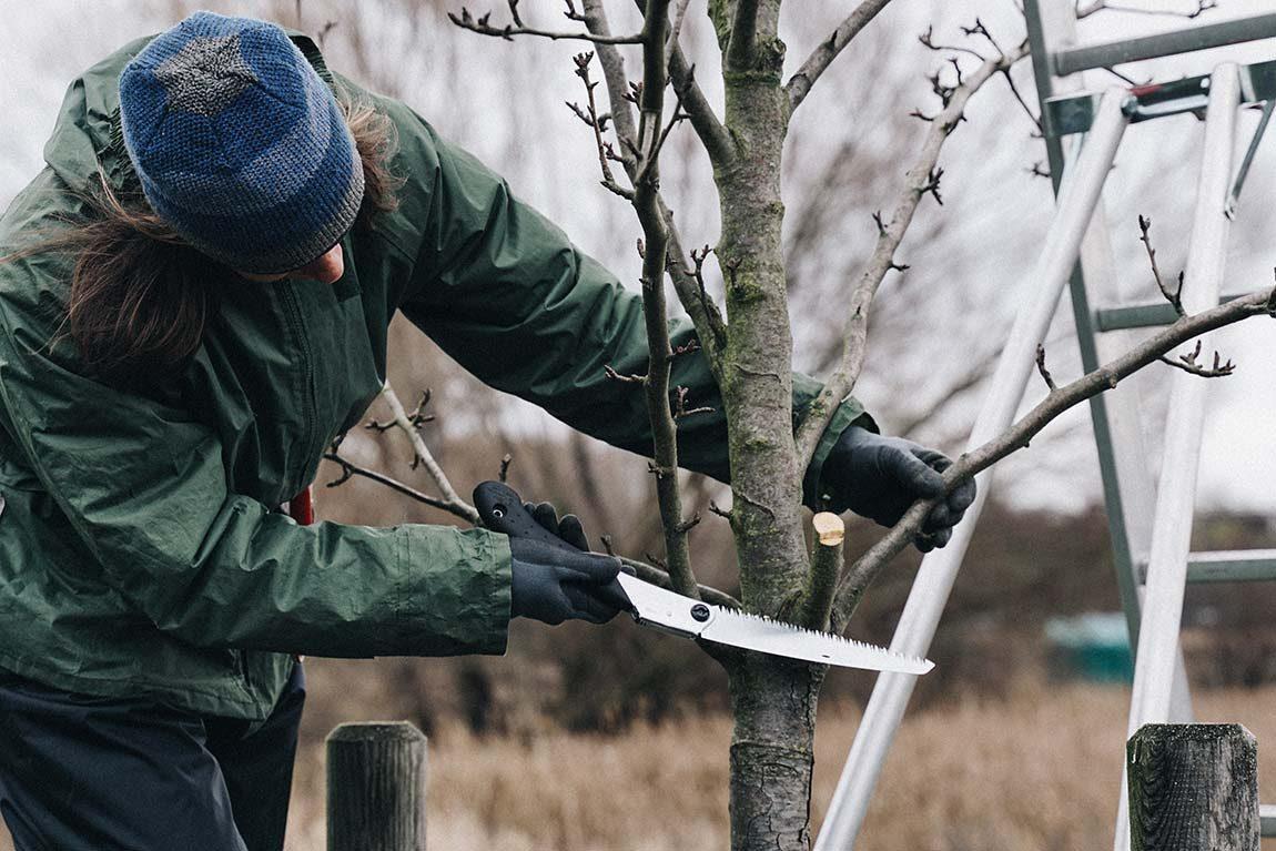 Alten Obstbaum Richtig Schneiden Verlosung Von Zwei Jahreskarten