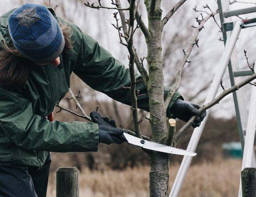 Anleitung um alten Obstbaum richtig zu schneiden