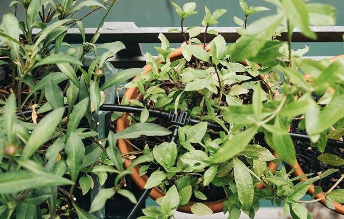 Eckverteiler des Gardena Aqua Bloom Micro Drip Systems