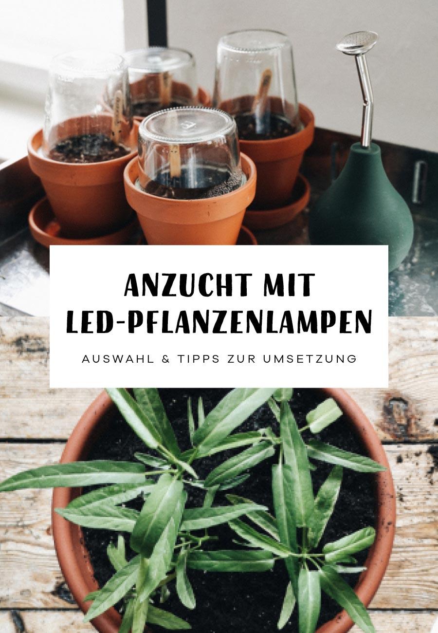 Aussaat Jungpflanzen Gemüse LED Pflanzenlampen