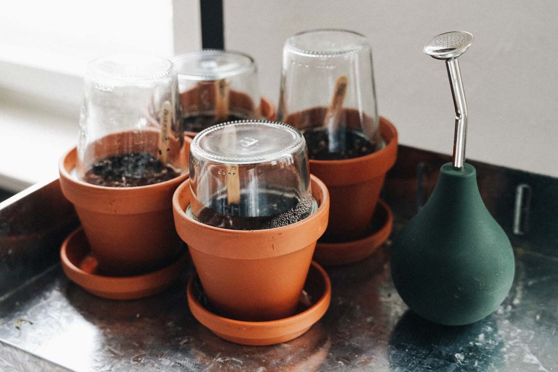 Gemüse Aussaat Pflanzenlampen
