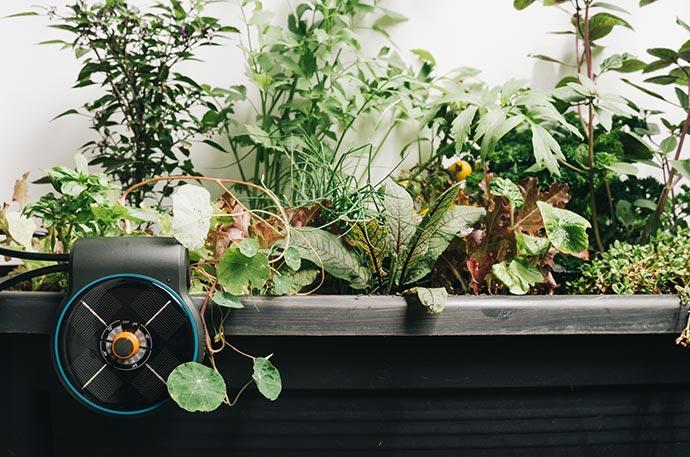 Hochbeet automatisch bewässern