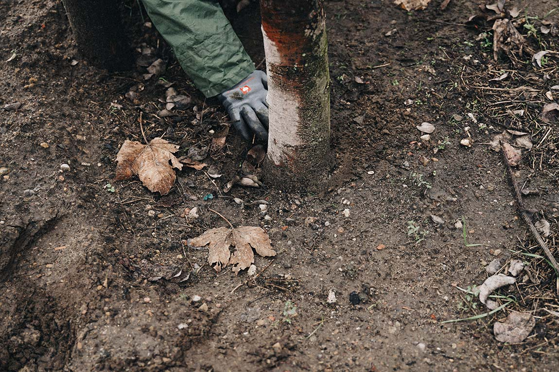 Baum vor dem Schneiden analysieren