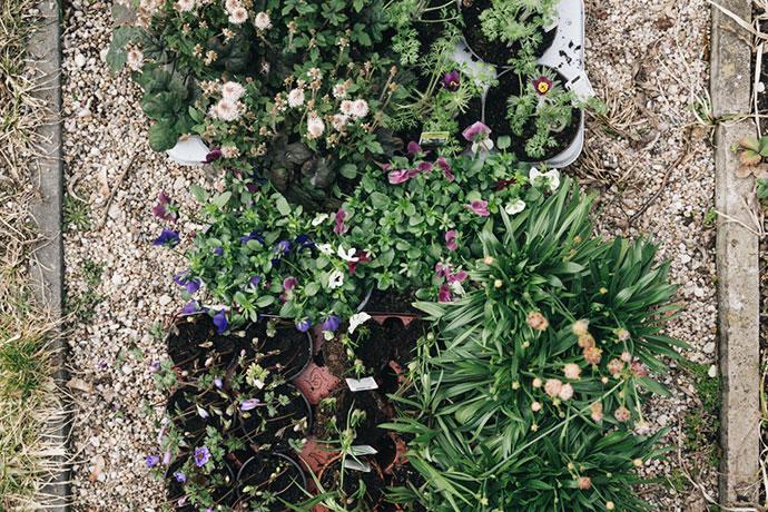 vorgezogene Blumen