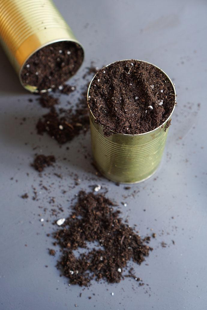 Blechdosen eignen sich gut als Upcycling Pflanzgefäße für Urban Gardening