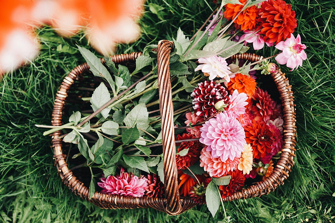 Dahlien Blumenstrauß im Korb