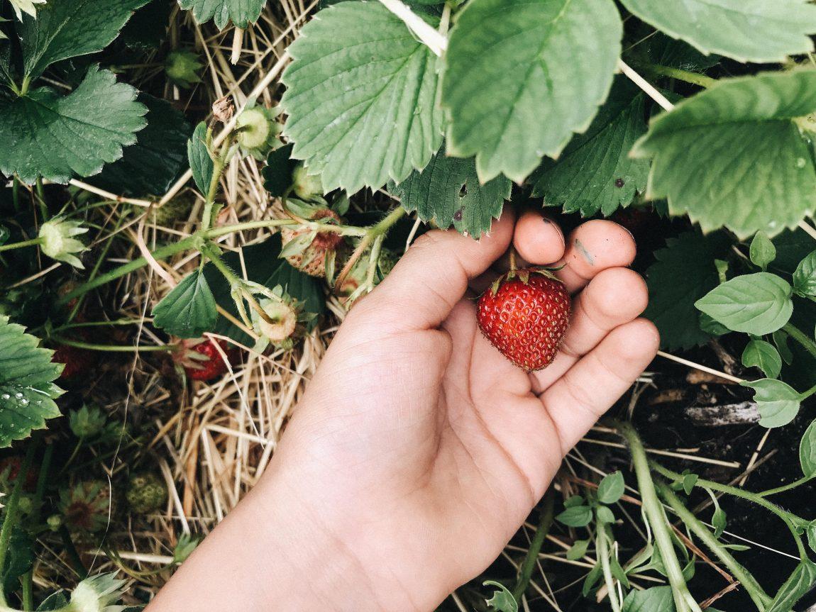 Fabelhaft Pflück Dein Glück – Tipps und Ideen rund um die Erdbeere @WK_59