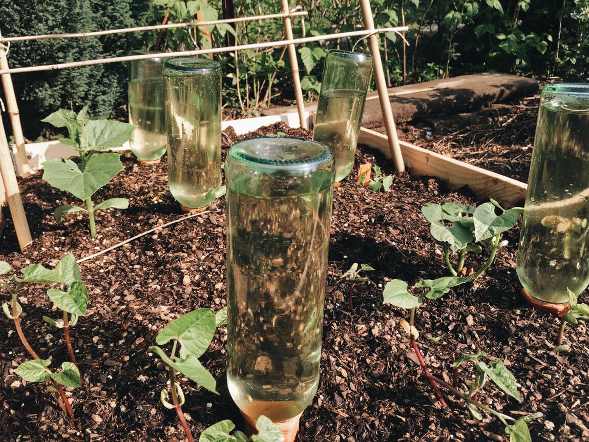 Gartenbeet mit Weinflaschen bewässern