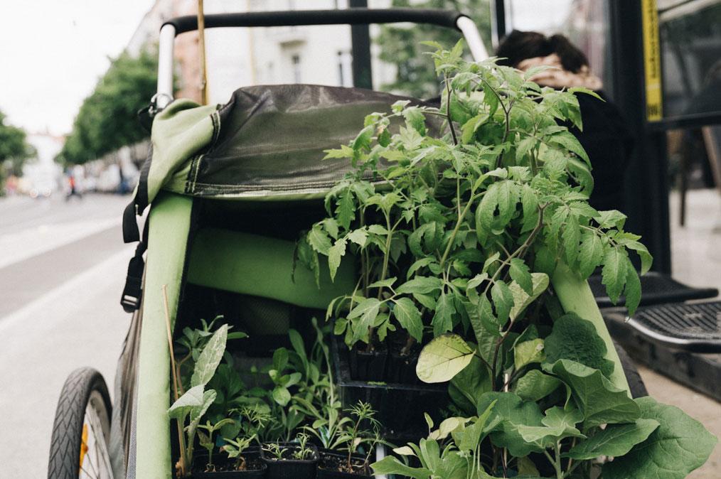 Jungpflanzen Fahrradanhänger