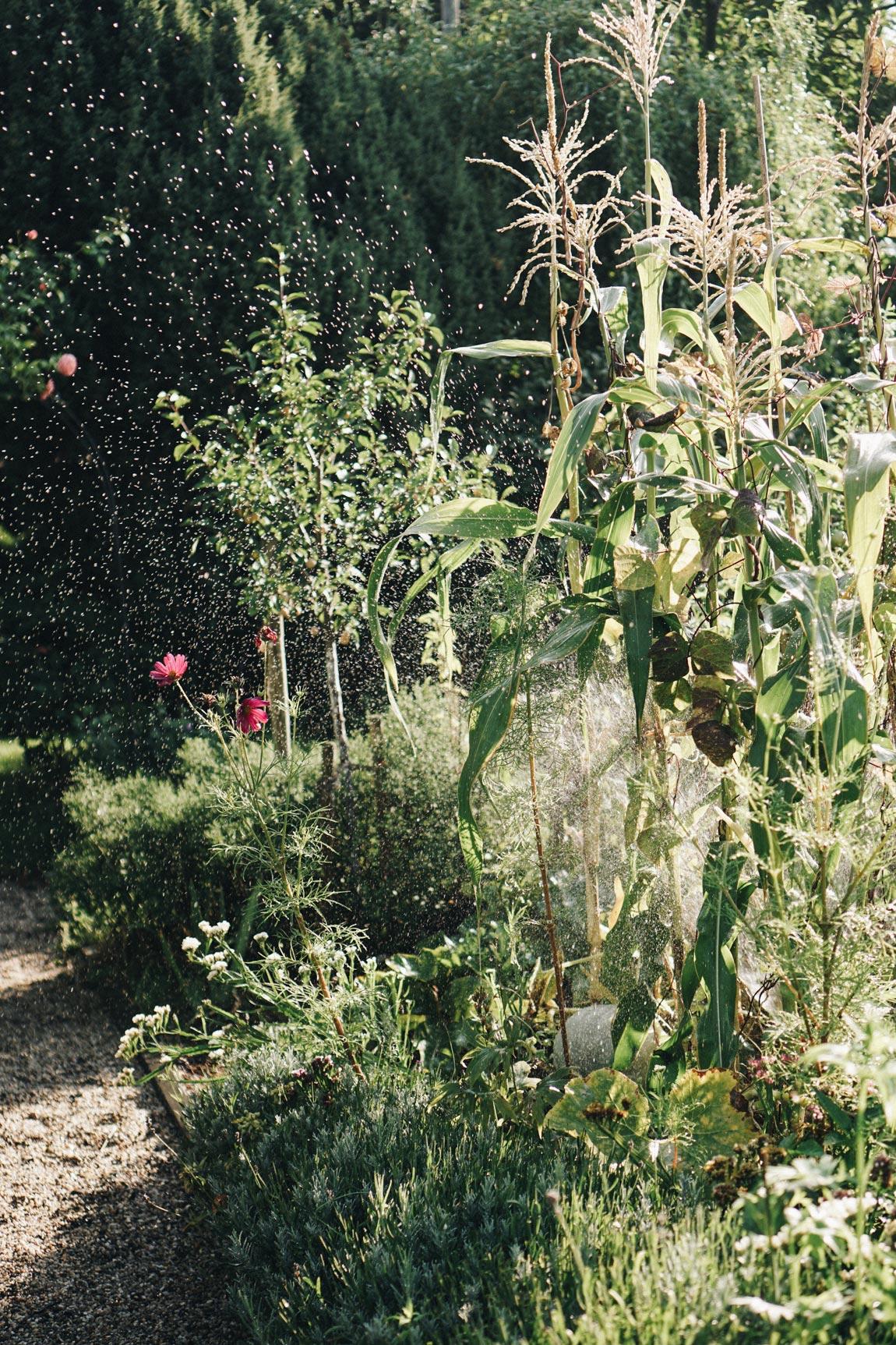 Garten automatisch bewässern für den Urlaub