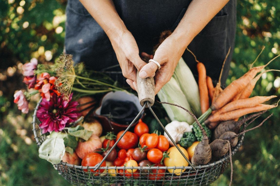 Gemüsegarten planen und Selbstversorgung starten