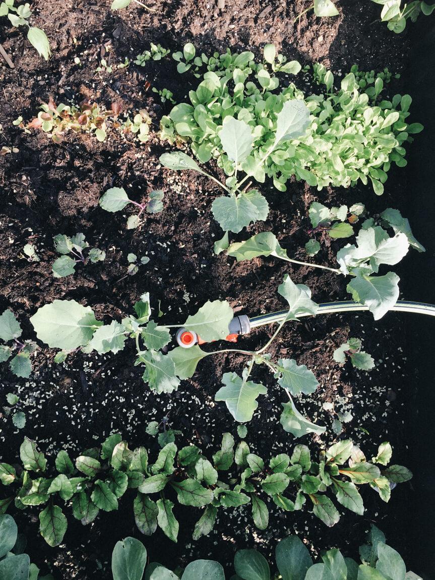 Gemüsebeet bewässern Urlaub