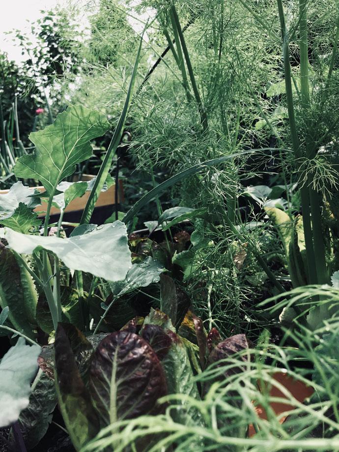 Hochbeet Bewaesserung Olla Gartenblog Hauptstadtgarten