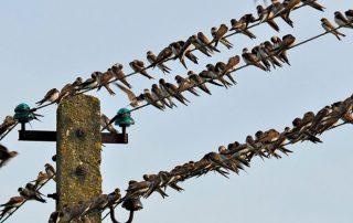 Gartenblogger Blind - Date I like Birds