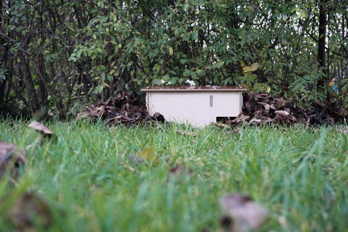 Der Garten aus der Perspektive des Igels fotografiert.