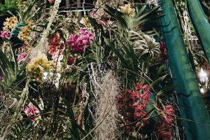 IGW Berlin Grüne Woche Blumenhalle Quelle der Vielfalt