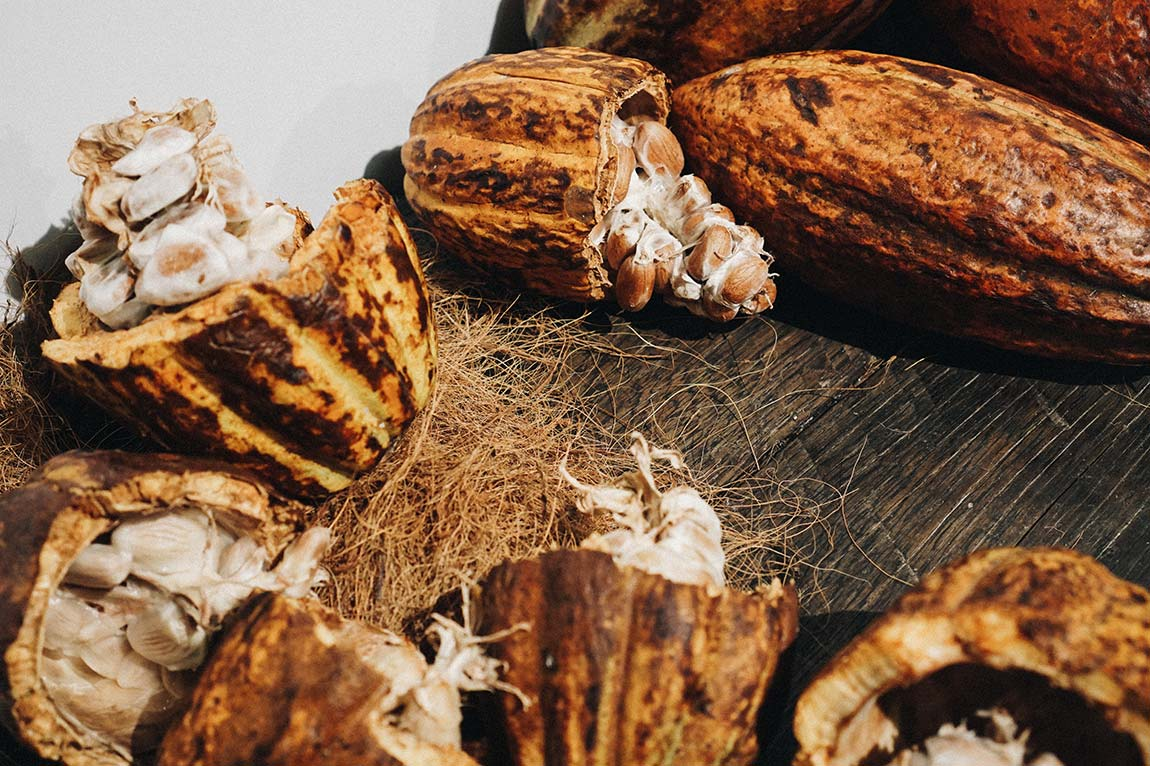 IGW Berlin Grüne Woche Kakaobohnen Anbau