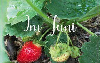 Gartenblog im Juni