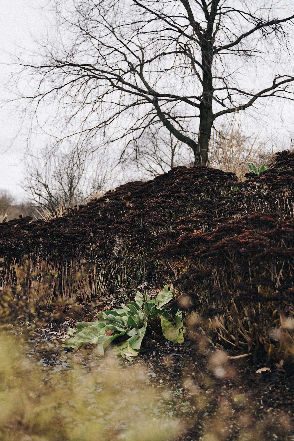 Kienbergpark Herbststimmung