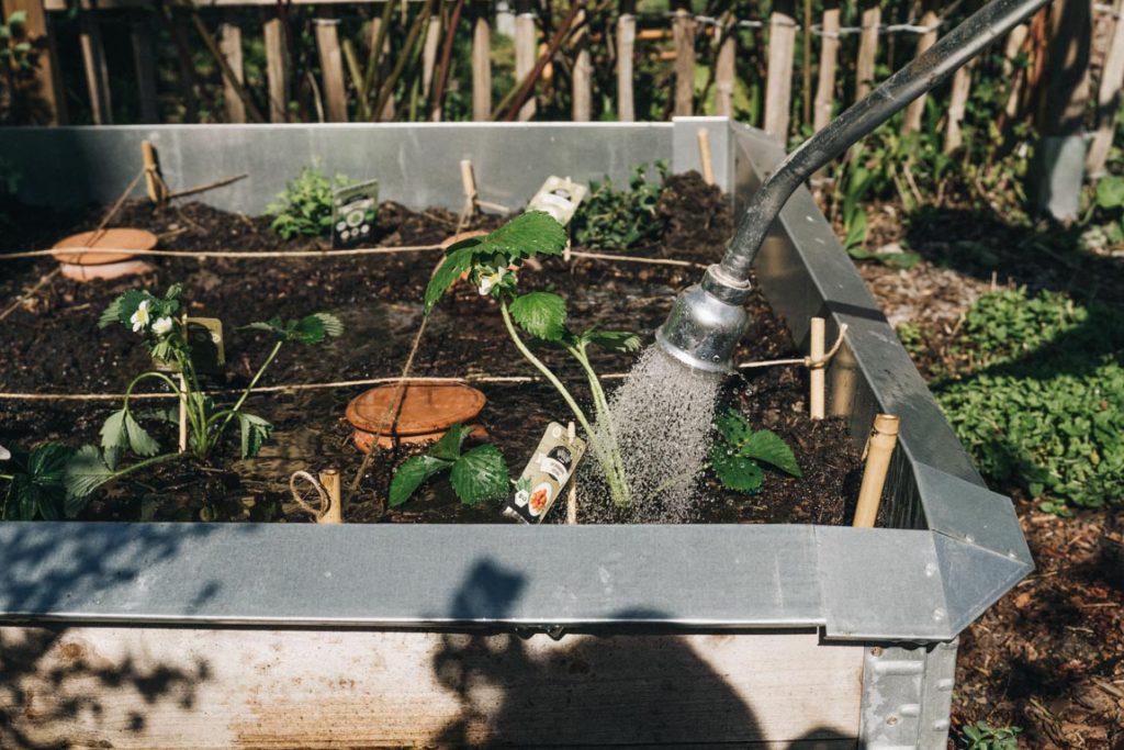 Kinder Garten gießen