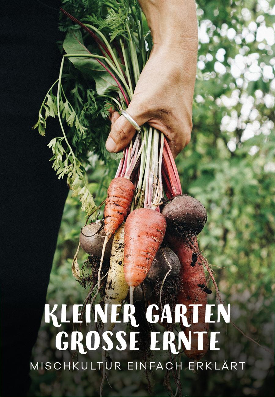 Mischkultur fruchtfolge Nutzgarten Gemüsegarten planen und Anbauplan erstellen