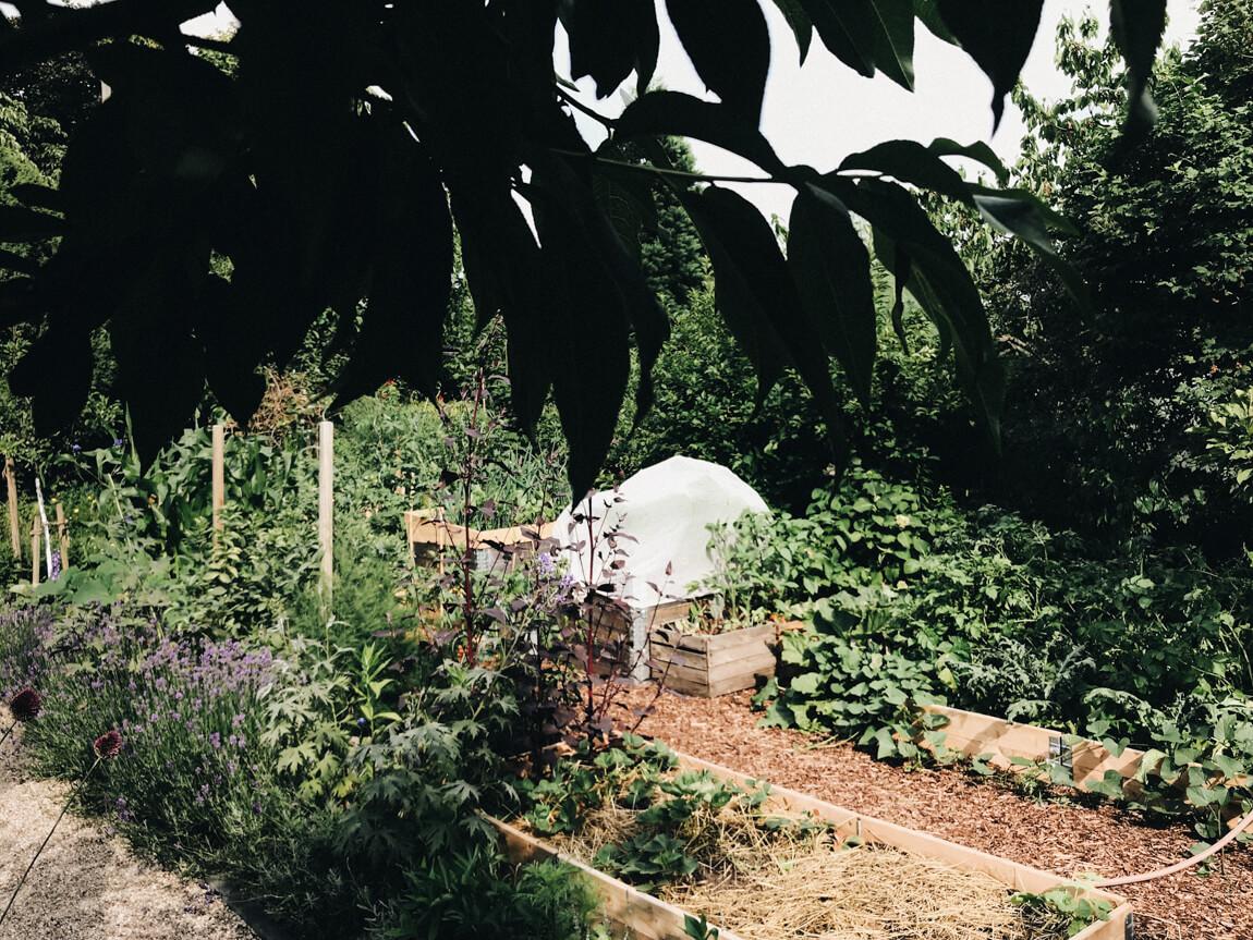 Nutzgarten richtig gießen
