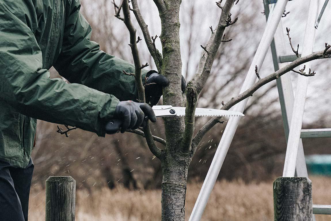 Obstbaum Ast absägen