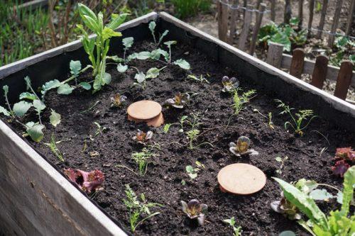 Hochbeet Bewässerung mit Tongefäßen als Wasserspeicher