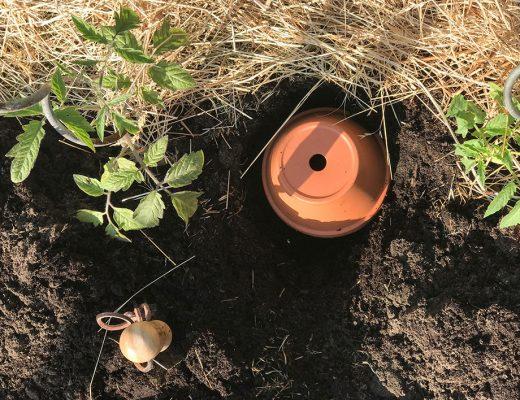 Ollas für die Garten Bewässerung selber machen