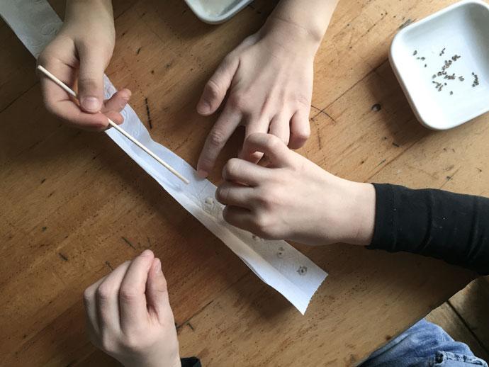 Anleitung, wie man Saatbänder aus Möhrensamen oder anderem feinen Saatgut selber machen kann.