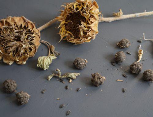 Wir machen Samenbomben selber…