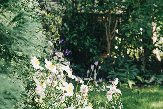 Blühendes Beet im Herbst