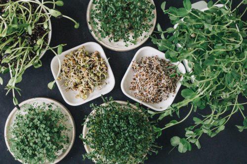 Super Green, verschiedene Keimsprossen und Microgreens