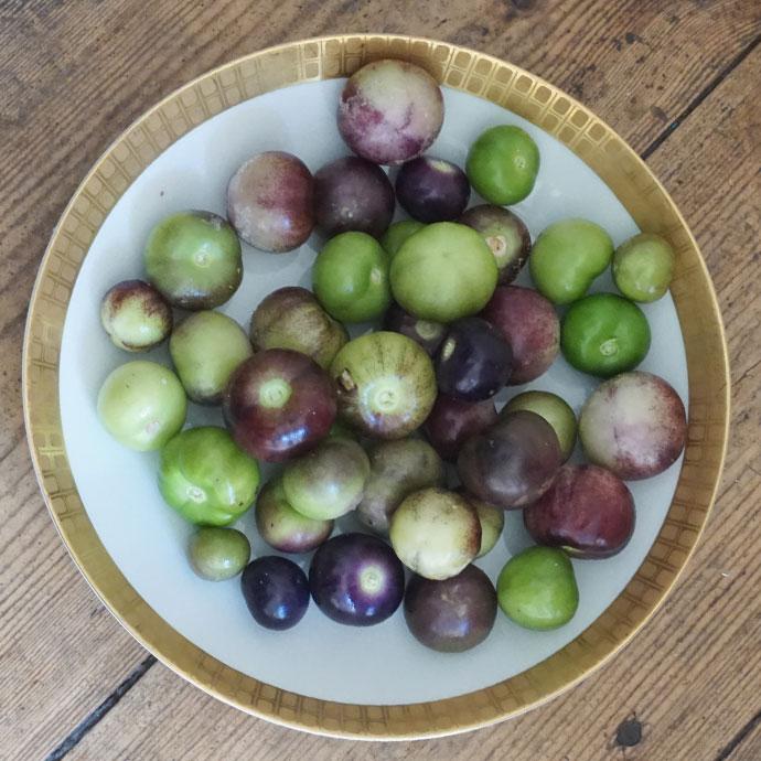 Tomatillos Purple für Salsa Verde