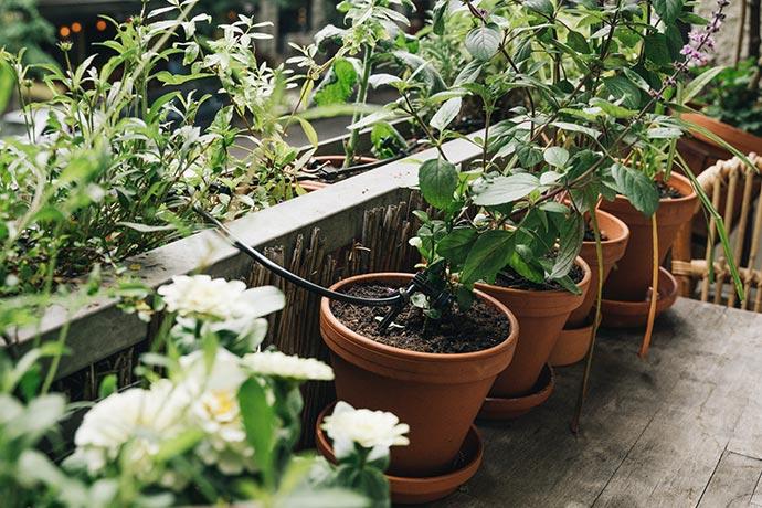 Tropfbewässerung für Töpfe und Kübel