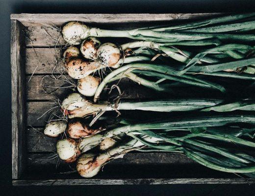 Zwiebel anpflanzen - Pflegeleichtes Gemüse für Anfänger